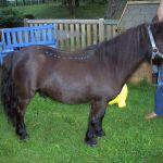 akupunktur-pferd1
