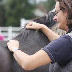 akupunktur-pferd8