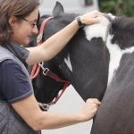 akupunktur-pferd9