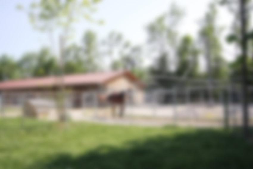 almsteg25 background image