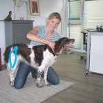chiropraktik-hunde2