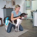 chiropraktik-hunde3